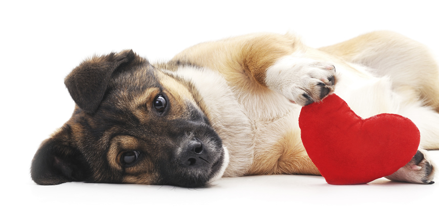 cute-dog-playing-with-red-heart